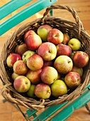A Basket of Fresh Picked Apples