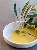 Olive Branch in Olive Oil