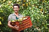 Mann trägt eine Kiste mit Orangen