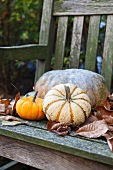 Pumpkins on a wooden bench