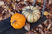 Pumpkins on a swing