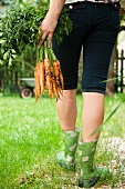 Woman carrying freshly pulled carrots in garden