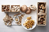 Still Life: Assorted Mushrooms