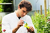 A young scientist examining flowers outside
