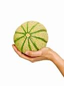 A hand holding a cantaloupe melon