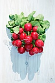 A bunch of radishes