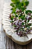 Flowering marjoram in a wooden bowl