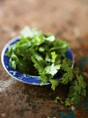 Fresh coriander in a bowl
