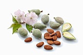Green almonds, brown almond seeds and almond flowers