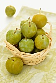 A basket of fresh greengages