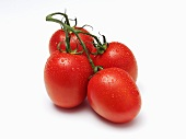 Four Wet Tomatoes with Vine on White Background