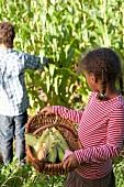 Children picking corn cobs