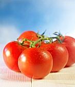 Fresh, wet vine tomatoes
