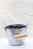 Fresh forest blueberries in an aluminium bucket