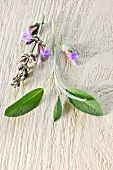 Sage flowers and leaves