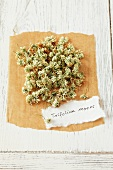 Weissklee (Trifolium repens), getrocknet