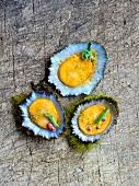 Abalone in den Muschelschalen