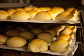 Brioche rolls on a baking tray