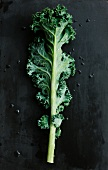 Ein Grünkohlblatt mit Wassertropfen