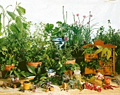 An arrangement of herbs and spice