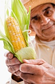 Älterer Mann hält einen Maiskolben in der Hand