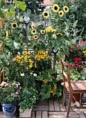 Sommerblumen und Gemüse in Töpfen auf Terrasse