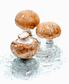Three brown mushrooms on a wet mirror