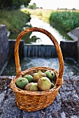 Fresh figs and green walnuts in a wicker basket
