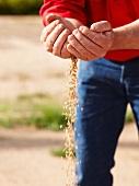 A trickle of barley grains