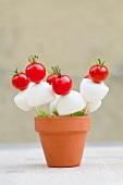 Cherry tomato and mozzarella on sticks