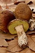 Fresh porcini mushrooms on autumnal leaves