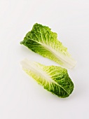 Two cos lettuce leaves