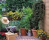 Lauschiger Balkon mit prächtigen, gelben Blüten und großen Topfpflanzen in einer Ecke