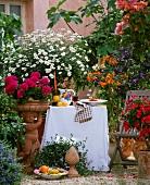 Toskanaflair auf einem Balkon: Geranien, Margeriten, Enzianbaum, Marmeladenbusch (Streptosolen), Blaue Mauritius (Convolvulus), Terracottatöpfe und -putte