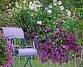 Blühende Petunien neben einem Stuhl auf einem Balkon