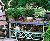 Blumenbank mit Duftgeranien und großen Zierartischocken
