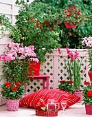 Blühender Balkon mit prächtigen Blüten von rot bis rosa