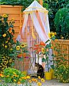 Kleiner Teetisch unter Moskitonetz auf einem Balkon mit Sonnenblumen