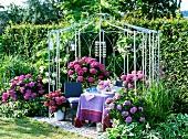 Pavillon mit Hortensien (Hydrangea macrophylla und Hydrangea paniculata)