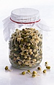 Mung Bean Sprouts in Sprouting Jar
