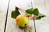 An apple on a twig with blossoms