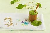 Radish leaf pesto and sunflower seeds