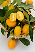Kumquats on a sprig, one halved