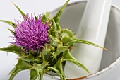 A milk thistle in a mortar