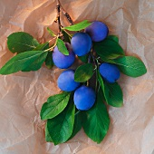 A sprig of plums