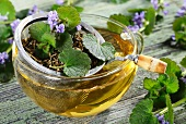 Ground ivy tea with a tea strainer