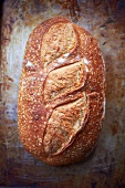 Whole Loaf of Country Bread; From Above