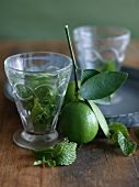 Lime with Branch and Mint for Mojitos
