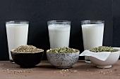 Selbstgemachte Hanfdrink mit ganzen Samen und mit geschälten Samen; eine Milch wurde noch gefiltert