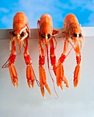 Three langoustines hanging over a wall